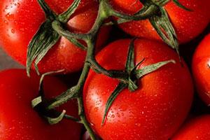 چرخه محصول رب گوجه فرنگی
