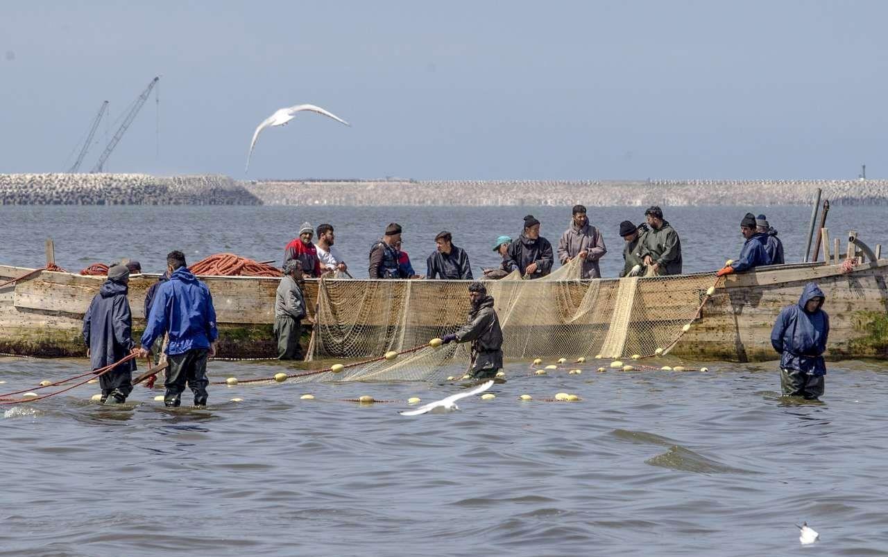 فصل صید ماهیان تن