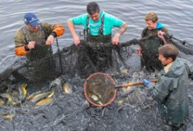 صید ماهی تن